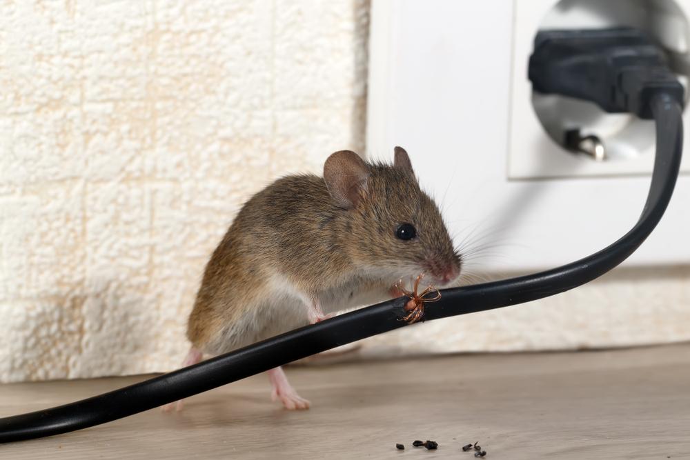 картинки вредная еда с крысами и мышами невкусная игрушка, тебя