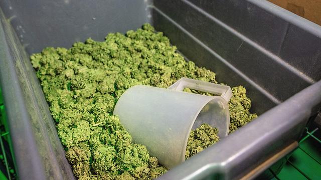 Лечебная марихуана израиль химическое удобрение для конопли
