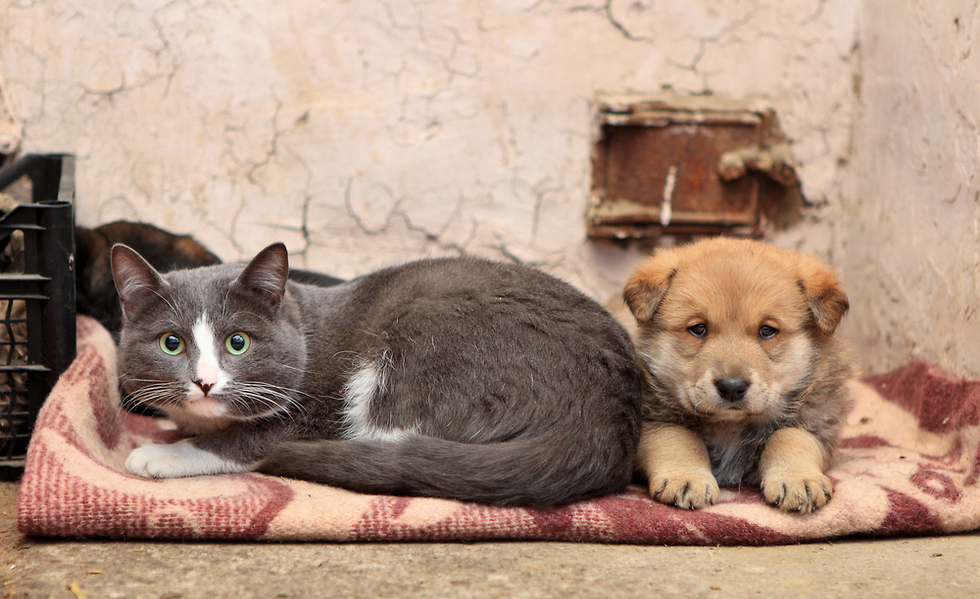 фотки кошек и собак бездомных разрабатывают